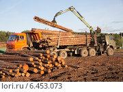 Купить «Заготовка леса», фото № 6453073, снято 1 сентября 2014 г. (c) Михаил Рыбачек / Фотобанк Лори