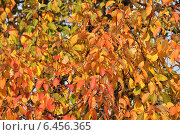 Купить «Красивый яркий фон из мелких осенних листочков», эксклюзивное фото № 6456365, снято 27 сентября 2014 г. (c) lana1501 / Фотобанк Лори