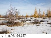 Купить «Первый снег в ямальской тундре прикрывший осеннюю листву», фото № 6464657, снято 28 сентября 2014 г. (c) Михаил Рыбачек / Фотобанк Лори