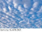 Купить «Перистые облака в синем небе», фото № 6478961, снято 8 сентября 2014 г. (c) Сергей Лаврентьев / Фотобанк Лори