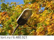 Купить «Старый уличный фонарь на фоне осенних листьев», эксклюзивное фото № 6480921, снято 18 сентября 2014 г. (c) lana1501 / Фотобанк Лори