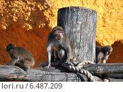 Купить «Обезьяны в зоопарке», эксклюзивное фото № 6487209, снято 4 октября 2014 г. (c) lana1501 / Фотобанк Лори