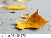 Кленовый лист. Стоковое фото, фотограф Александр Максимов / Фотобанк Лори