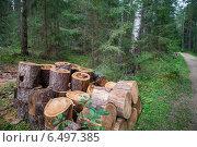 Купить «Уборка леса от больных деревьев», фото № 6497385, снято 21 августа 2014 г. (c) Родион Власов / Фотобанк Лори