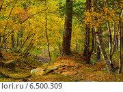 Купить «Красочный лес в горах Кавказа осенью», фото № 6500309, снято 3 октября 2014 г. (c) александр жарников / Фотобанк Лори