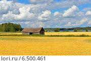 Пейзаж с золотыми полями в конце лета. Стоковое фото, фотограф Валерия Попова / Фотобанк Лори
