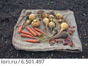 Репа, редька и морковь. Стоковое фото, фотограф рустам ниязов / Фотобанк Лори