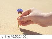 Синий цветок в женской руке на фоне желтого песка. Стоковое фото, фотограф Andrei Nekrassov / Фотобанк Лори