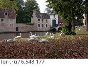 Купить «Лебеди на пруду в Бельгии», фото № 6548177, снято 11 июня 2014 г. (c) Александра Орехова / Фотобанк Лори