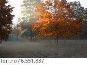 Купить «Осенний дуб в сумерках», фото № 6551837, снято 12 октября 2014 г. (c) Афанасьева Ольга / Фотобанк Лори