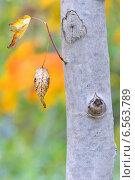 Осенний лист на ветке. Стоковое фото, фотограф Iordache Carmen Anne Marie / Фотобанк Лори