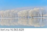 Зимние деревья, покрытые инеем. Стоковое фото, фотограф Iordache Carmen Anne Marie / Фотобанк Лори