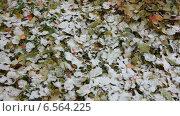Купить «Первый снег на опавших листьях», видеоролик № 6564225, снято 20 октября 2014 г. (c) Кекяляйнен Андрей / Фотобанк Лори