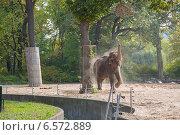 Слон в зоопарке. Стоковое фото, фотограф Анастасия Улитко / Фотобанк Лори