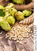 Купить «Ячменные зерна и шишки хмеля на деревянном столе», фото № 6574497, снято 6 октября 2014 г. (c) Оксана Ковач / Фотобанк Лори