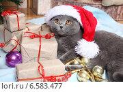 Купить «Красивый британский кот в новогоднем колпаке», фото № 6583477, снято 8 декабря 2012 г. (c) Останина Екатерина / Фотобанк Лори