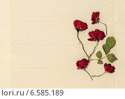Открытка-композиция из сухих цветов с местом для текста на льняной салфетке. Стоковое фото, фотограф Marina Kutukova / Фотобанк Лори