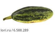 Купить «Зелёный кабачок», фото № 6588289, снято 24 августа 2014 г. (c) Литвяк Игорь / Фотобанк Лори