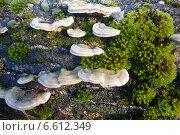 Ритм в природе. Стоковое фото, фотограф Сергей Сипаков / Фотобанк Лори