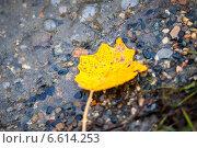 Осенний желтый лист на берегу реки. Стоковое фото, фотограф Давид Арутюнов / Фотобанк Лори