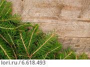 Купить «Фон из еловых веток», фото № 6618493, снято 30 октября 2014 г. (c) Мастепанов Павел / Фотобанк Лори