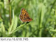 Бабочка. Стоковое фото, фотограф Андрей / Фотобанк Лори