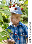 Купить «A child boy in an orchard during summer.», фото № 6620161, снято 9 апреля 2020 г. (c) BE&W Photo / Фотобанк Лори