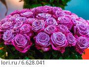 Большой букет сиреневых роз. Стоковое фото, фотограф Ольга Сейфутдинова / Фотобанк Лори