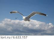 Чайка. Стоковое фото, фотограф Короткова Мария / Фотобанк Лори