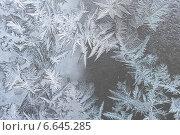 Купить «Морозный узор», фото № 6645285, снято 21 октября 2014 г. (c) Павел Родимов / Фотобанк Лори