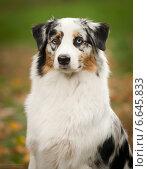 Портрет собаки на зеленом фоне. Стоковое фото, фотограф Дарья Июньская / Фотобанк Лори