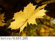 Осень. Стоковое фото, фотограф Ольга Ермакова / Фотобанк Лори
