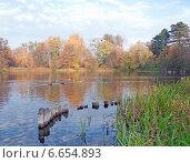 Купить «Осенний пруд», эксклюзивное фото № 6654893, снято 2 ноября 2014 г. (c) Svet / Фотобанк Лори