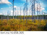 Осенний лес в солнечный день в Карелии, Россия. Стоковое фото, фотограф Alexander Shadrin / Фотобанк Лори