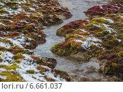 Купить «Весенняя тундра», фото № 6661037, снято 11 августа 2013 г. (c) Николай Гернет / Фотобанк Лори