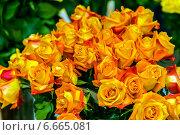 Букет чайногибридных оранжевых роз. Стоковое фото, фотограф Ольга Сейфутдинова / Фотобанк Лори