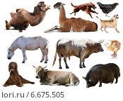 Купить «Set of bull and other farm animals», фото № 6675505, снято 19 октября 2018 г. (c) Яков Филимонов / Фотобанк Лори