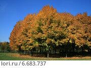 Купить «Осенний лес в ясную погоду», эксклюзивное фото № 6683737, снято 30 сентября 2007 г. (c) Алексей Гусев / Фотобанк Лори