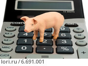 pig and calculator. Стоковое фото, фотограф Erwin Wodicka / Фотобанк Лори