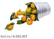 Купить «Спелые мандарины в металлическом ведерке на белом фоне», фото № 6692901, снято 15 декабря 2018 г. (c) Илюхина Наталья / Фотобанк Лори
