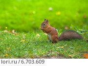 Купить «Рыжая белка ест орех», фото № 6703609, снято 19 сентября 2014 г. (c) Литвяк Игорь / Фотобанк Лори