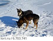 Бездомные собаки. Стоковое фото, фотограф Александр Бураков / Фотобанк Лори