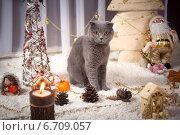 Купить «Красивый британский кот у новогодней елки», фото № 6709057, снято 26 мая 2018 г. (c) Останина Екатерина / Фотобанк Лори