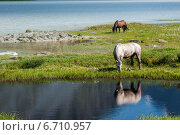 Озеро Аккем, лошади пасутся. Редакционное фото, фотограф Вячеслав Скоробогатов / Фотобанк Лори