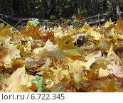 Осенняя листва. Стоковое фото, фотограф Цыганков Григорий Николаевич / Фотобанк Лори
