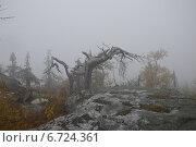 Туманное утро на Воттовааре. Стоковое фото, фотограф Владимир Семенов / Фотобанк Лори