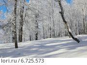 Купить «Заиндевевший лес . Зимний пейзаж», фото № 6725573, снято 8 февраля 2014 г. (c) Виталий Горелов / Фотобанк Лори