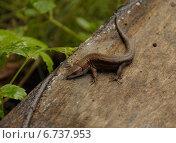 Ящерица на стволе дерева. Стоковое фото, фотограф Евгений Виноградов / Фотобанк Лори