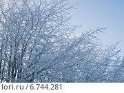 Деревья, покрытые изморозью. Стоковое фото, фотограф Инна Остановская / Фотобанк Лори