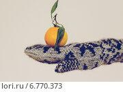 Купить «Мандарин на варежке», фото № 6770373, снято 21 августа 2018 г. (c) Александр Самолетов / Фотобанк Лори